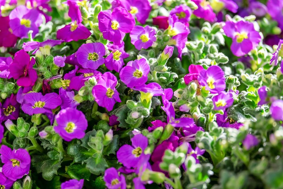 Nawóz do kwiatów i roślin ogrodowych i balkonowych